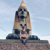 Дизайнер из Санкт-Петербурга делает потрясающих котов и снимает их на фоне города