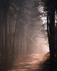 Якуб Венчек снимает польские леса, демонстрируя мрачную сущность природы