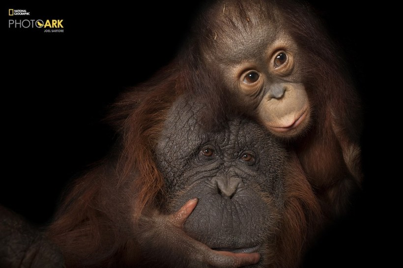 Мужчина посвятил свою жизнь съемке всех видов животных на планете