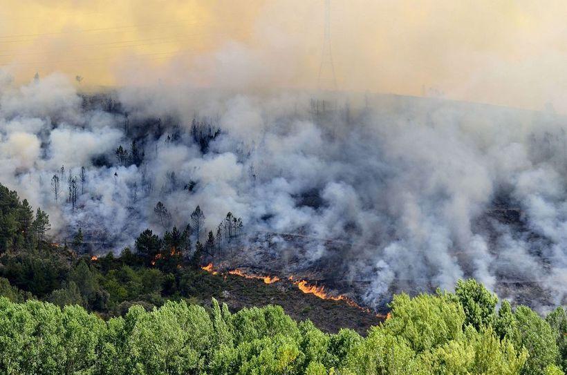 Способный остановить пламя: почему кипарис не горит в огне