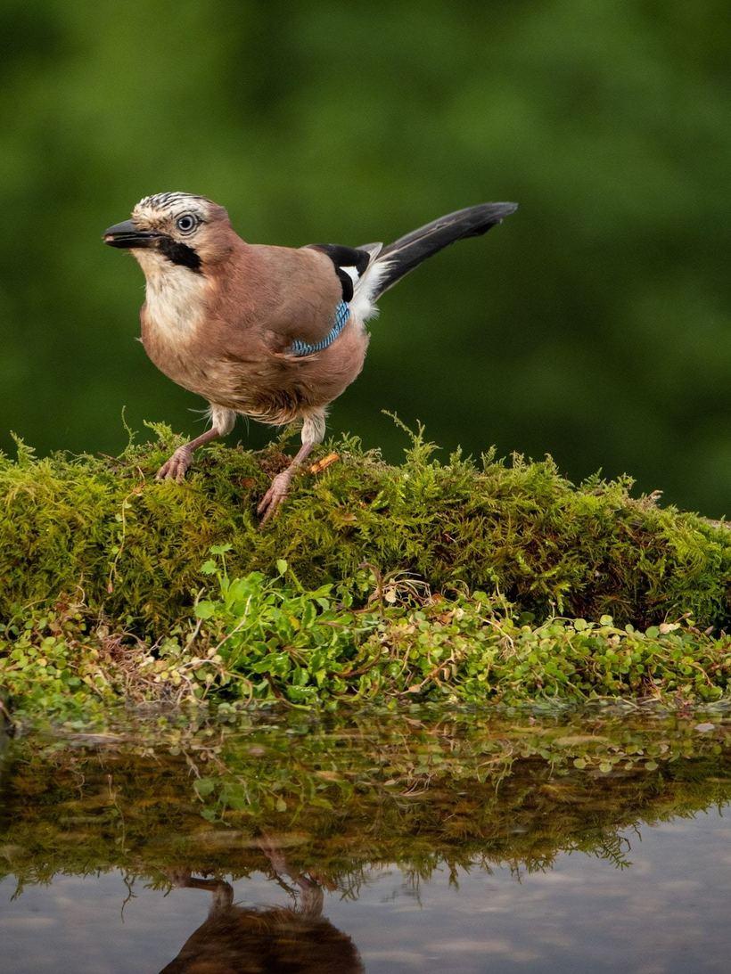 Парень построил во дворе специальную зону, чтобы снимать птиц, залетающих в гости