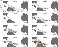 Пляжи Атлантики захватывает саргассум: в чем причина обилия бурых водорослей
