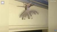 Самая страшная бабочка в мире: мужчина снял на видео создание с крыльями и щупальцами