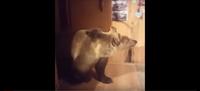 Видео: Медведь подошел к стоявшему у окна мужчине и по-дружески приобнял его