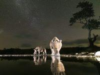 Фотограф затаился в кустах и запечатлел всех животных, которые пришли на водопой