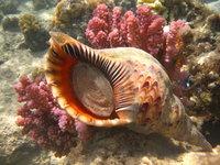 Акантастер: кто остановит пожирателя кораллов и спасет рифы планеты