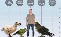 В Новой Зеландии обнаружены останки огромного древнего попугая размером с орла