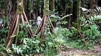 Огромный кит, ходячие пальмы и еще 17 самых странных находок, обнаруженных в джунглях