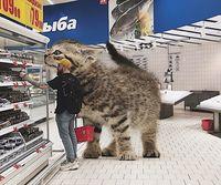Парень показывает, каким был бы наш мир, если бы в нем жили гигантские коты