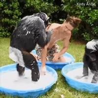 Видео: Как обезьяны помогают человеку мыть собаку