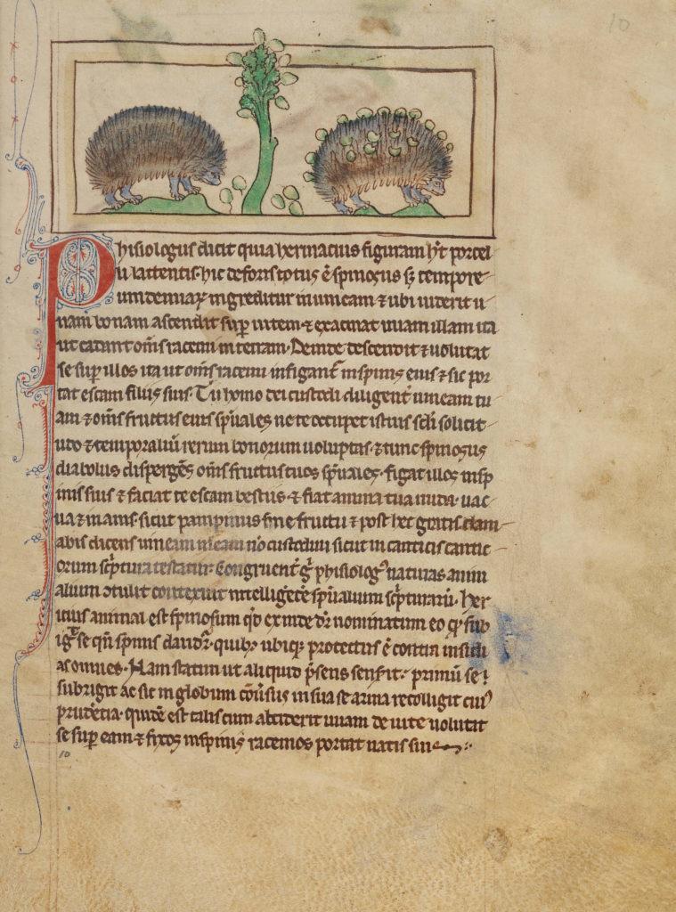 Фантастические твари Средних веков: бестиарий и его чудесные животные