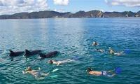 В Новой Зеландии запретили купаться с дельфинами