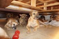 На Багамских островах женщина спрятала у себя дома почти сто собак от урагана