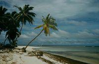 Остров сокровищ на самом деле существует, но к нему не подпускают акулы