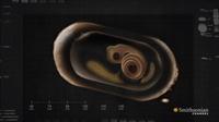 Камера сняла рождение 14 черных мамб, и происходящее выглядит как нечто грандиозное