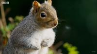 Видео: Как белки воруют друг у друга орехи