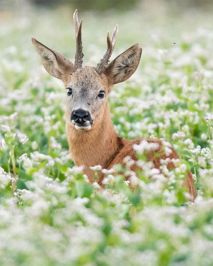 Что происходит в природе, когда никто не видит: 20 изумительных фото Дика ван Дуйна