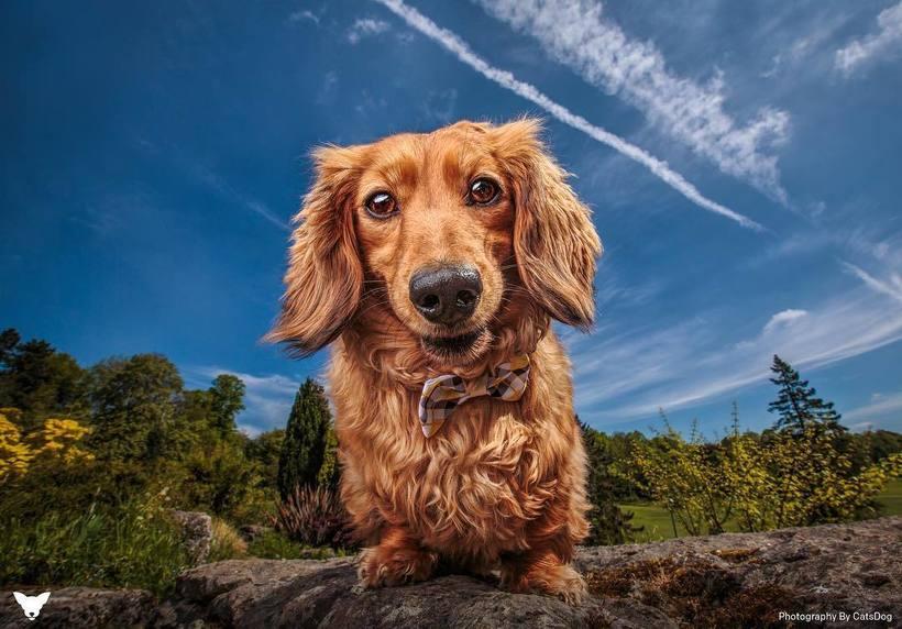 Фотограф из США делает потрясающие портреты собак по всему миру