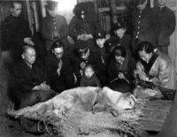 История и редкие фотографии Хатико, самой знаменитой собаки в мире
