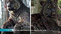 Видео: Пугающие животные, которых вывели сами люди