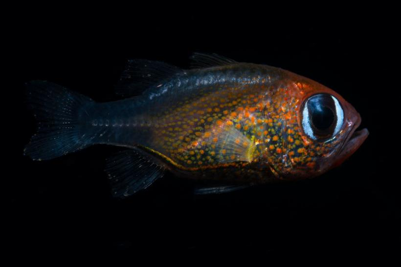В этом году было обнаружено свыше 70 новых видов, и вот как выглядят 13 из них