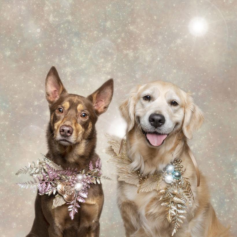 Фотограф делает чудесные рождественские портреты собак