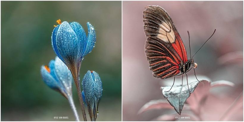 Волшебство макрофотографии: поразительный талант в маленьком видеть большое