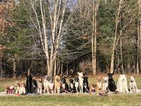 Парень выгуливает по 20 собак одновременно и делает невероятные фотографии