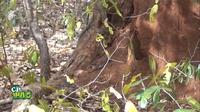 Трогательное видео: Мартышка хочет приютить котенка и пытается затащить его на дерево
