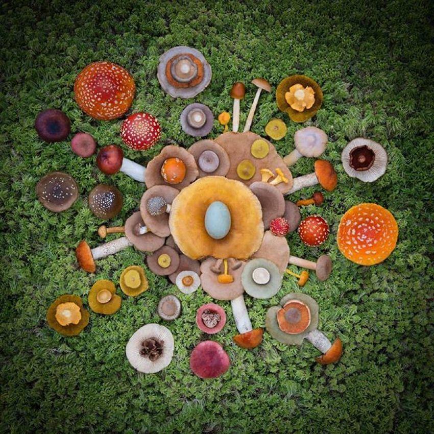 картины из грибов