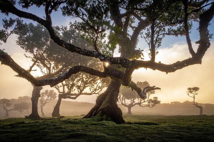 Очаровательные снимки древнего лаврового леса Мадейры с 500-летними деревьями