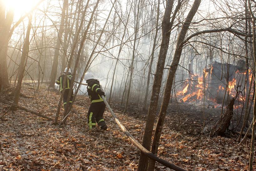 мангустин, картинки чернобыль пожар организациях ип