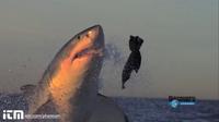 Видео: Животные в замедленной съемке — необычайно зрелищная подборка