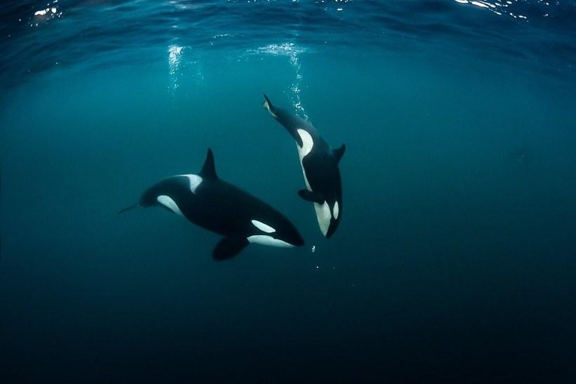 Фантастические работы одного из лучших подводных фотографов мира