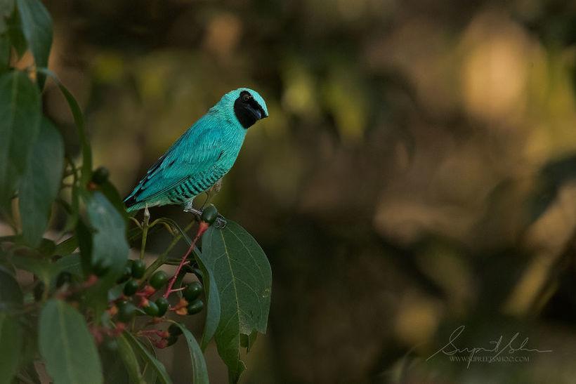 Мужчина побывал в Перу и снял самых невероятных птиц, обитающих там