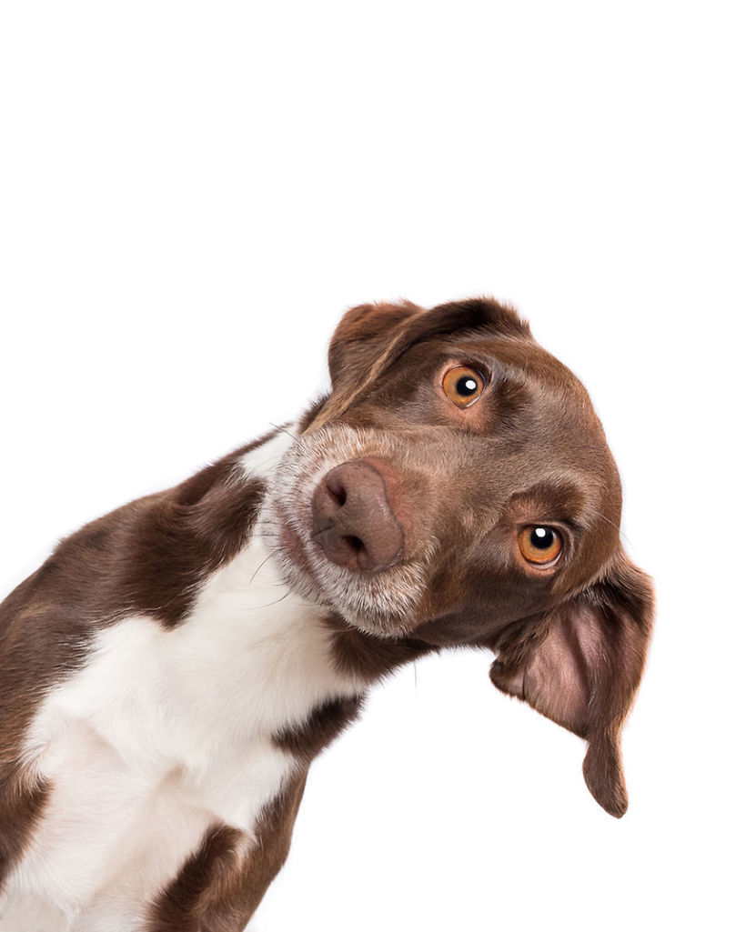 Фотограф делает очаровательные портреты любопытных собак