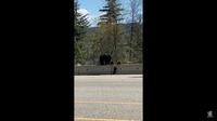 Видео: Медвежонок показал брату, как нужно залезать на дорожный барьер