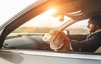Ученые выяснили, как собака в салоне автомобиля влияет на стиль вождения