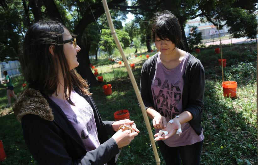 Каждый выпускник на Филиппинах должен посадить 10 деревьев