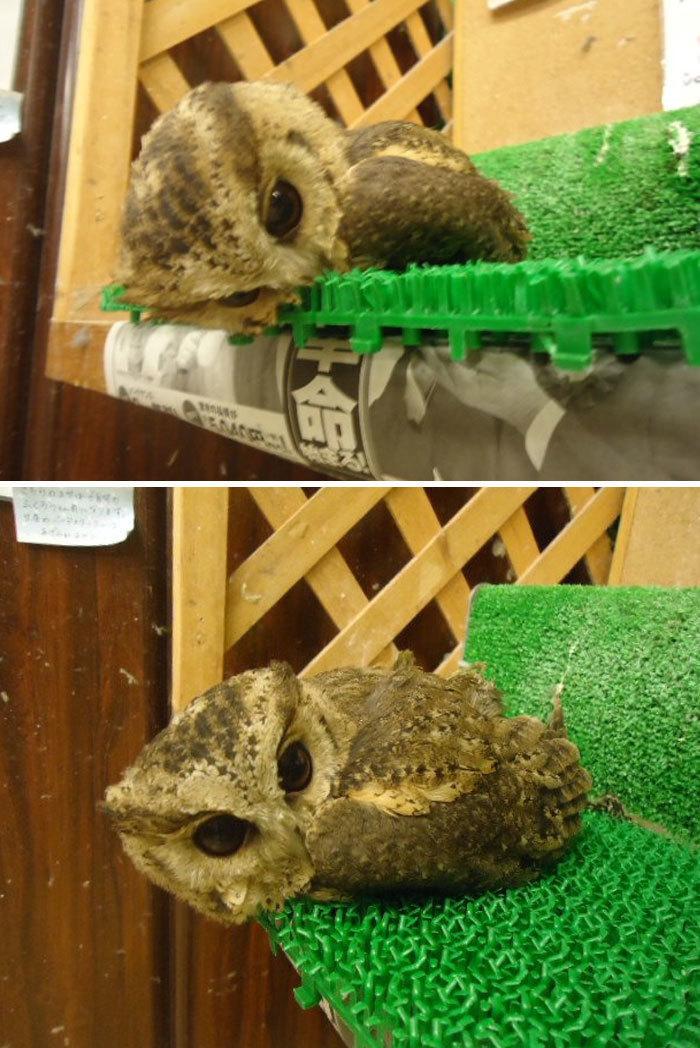 Наши забавные питомцы - Страница 4 Sleeping-baby-owls-face-down-4-5ef2f4e5df9c3__700