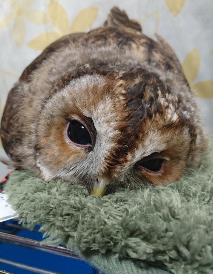 Наши забавные питомцы - Страница 4 Sleeping-baby-owls-face-down-16-5ef2f9f7c03c7__700