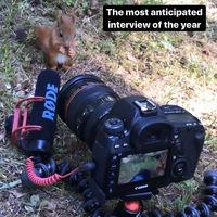 Фотограф записала, как белка жует еду, и видео набрало миллионы просмотров