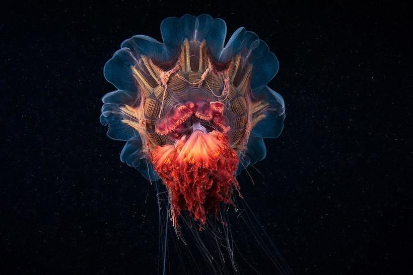 Морской биолог из России снимает удивительных малоизвестных морских существ