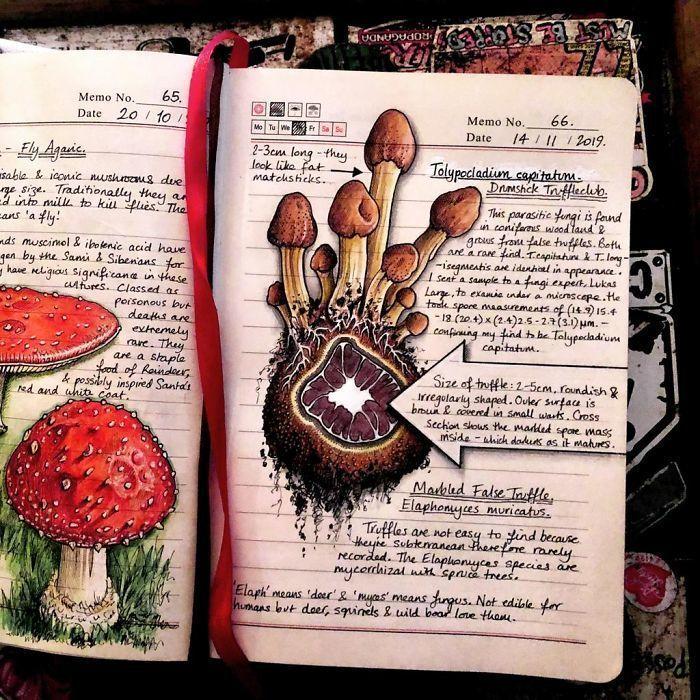 Женщина ведет «Журнал природы», делая чудесные иллюстрации об окружающем мире