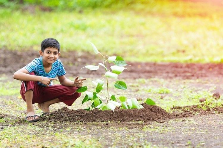 Волонтеры собрались в Индии, чтобы высадить 250 миллионов деревьев