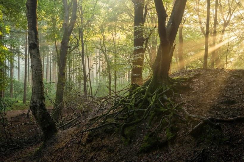 Один очаровательный лес, снятый в разные времена года