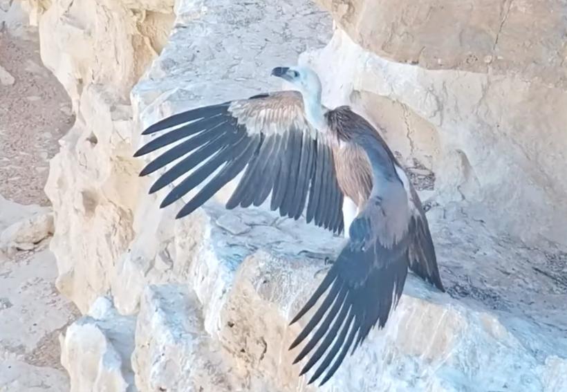 Дрон заменил птенцу мать: как в Израиле спасли обреченную на гибель птицу