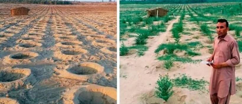 Пакистан высадил деревья на безжизненных землях и ошеломил результатом всего за год