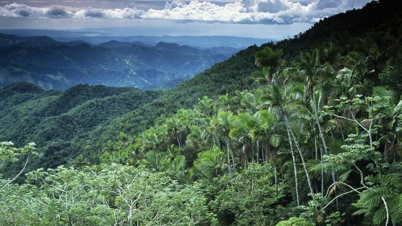Что происходит с теми регионами Африки, где вырубили тропический лес  - фото 4