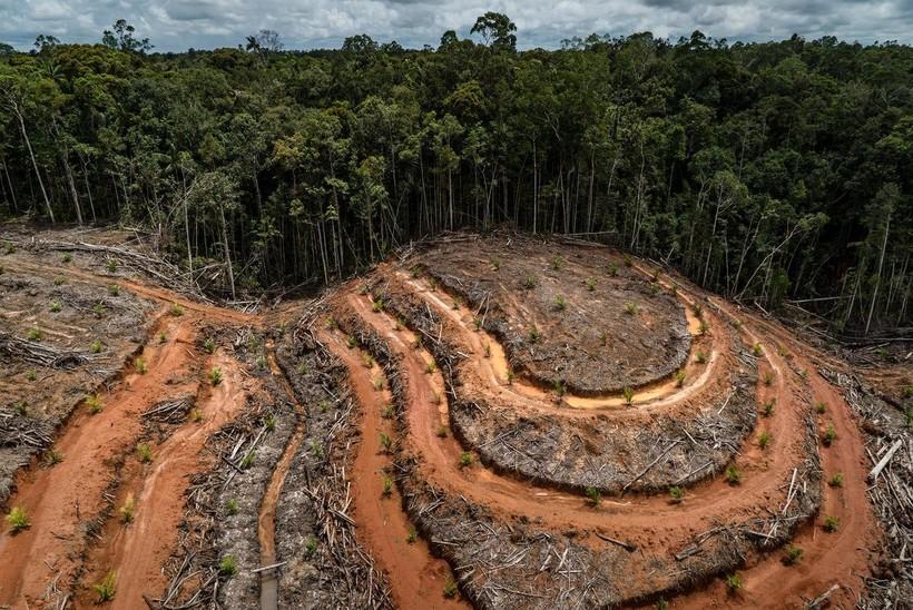 Что происходит с теми регионами Африки, где вырубили тропический лес  - фото 5
